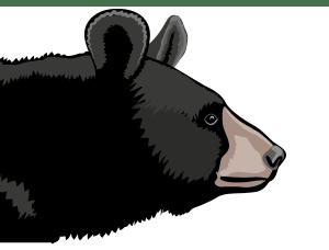 Detail - Asian black bear (Ursus thibetanus)