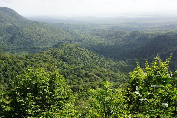 Kubanische Wälder