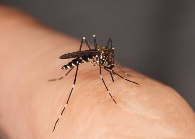 Mittel gegen Mückenstiche auf Reisen