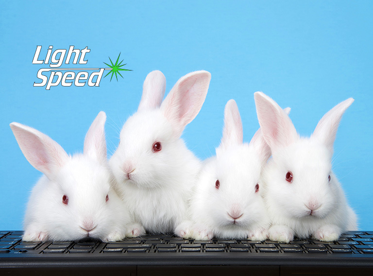 Four adorable white albino baby bunnies perched on a computer ke