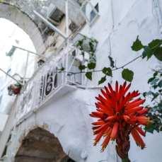 ostunia-biale-miasto