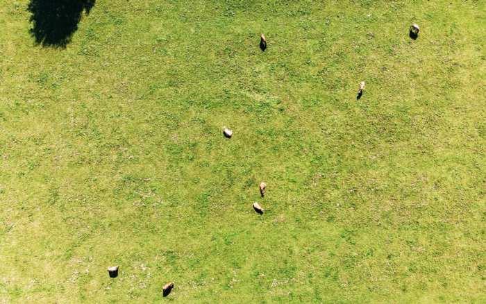 atrakcje-szwajcarii-widok-na-krowy