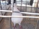 show bird 3