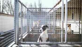 Confinement La Spa De Bordeaux Ne Veut Pas D Adoptions Mal Reflechies