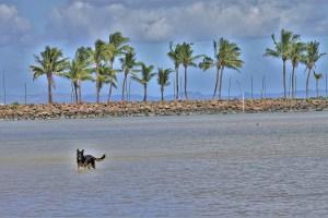Hund am Strand von Fidschi