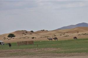 Am Rande der Sandwüste Gobi