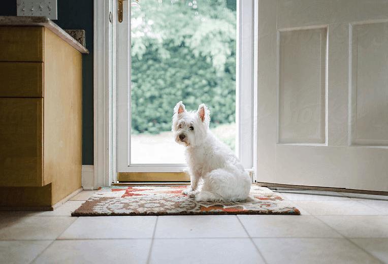 wait at door, dog waiting at door
