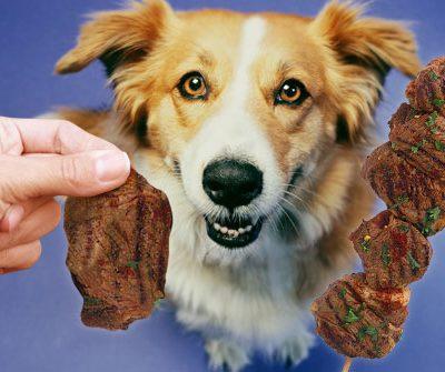 steak dog