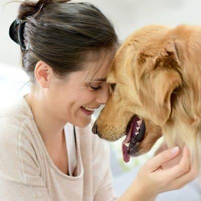 dog favorite person owner