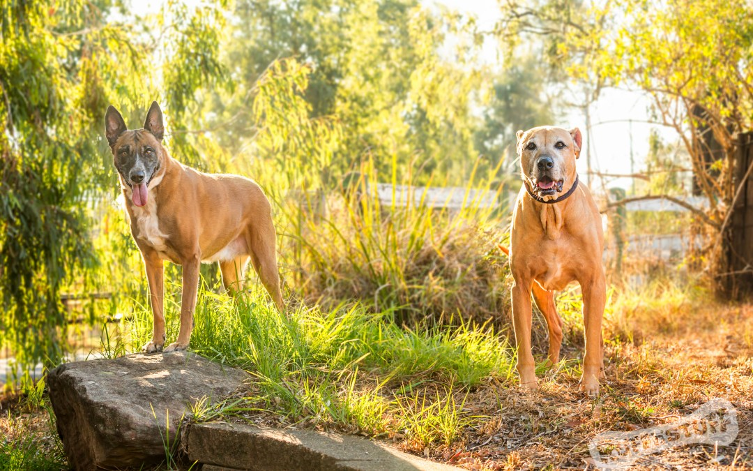 Double Trouble – Hawkesbury Pet Photographer