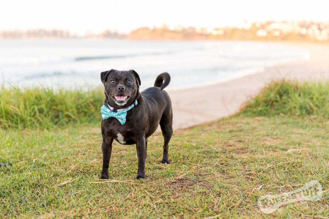 Shilo rocks Bombo | Ruff 'n Stuff Pet Photography | Helen Trenerry