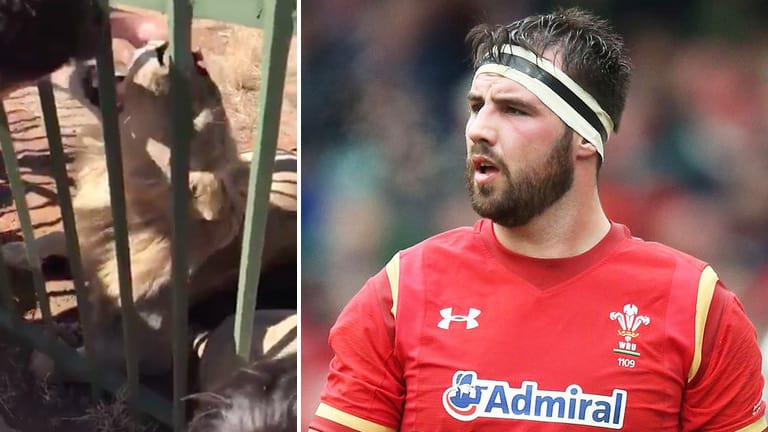 Pics: Scott Baldwin Posts Extremely Graphic Pictures Of Lion Bite Aftermath
