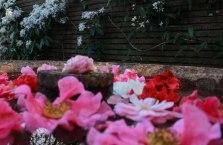 flowers in water (1 of 1)