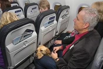A person with a guide dog after boarding a plane. Image from www.transportation.gov