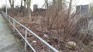 Müll im Laub