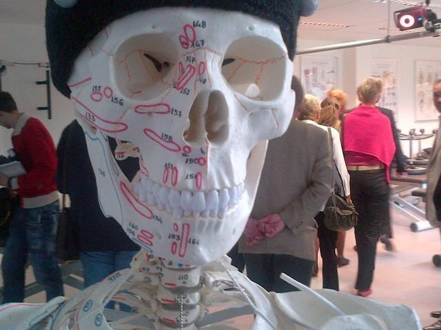 Skelett bzw. Schädel