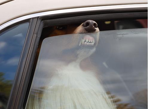 Dogs Smushing Their Faces Against Windows