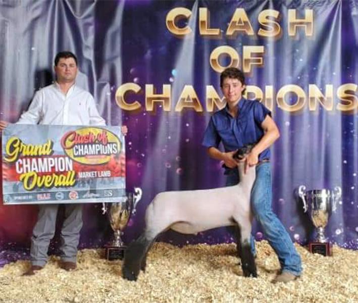 Rule Sheep Co Winners