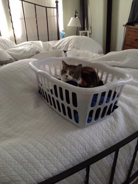 Seuss laundry