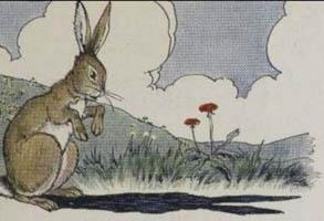 hare-ears