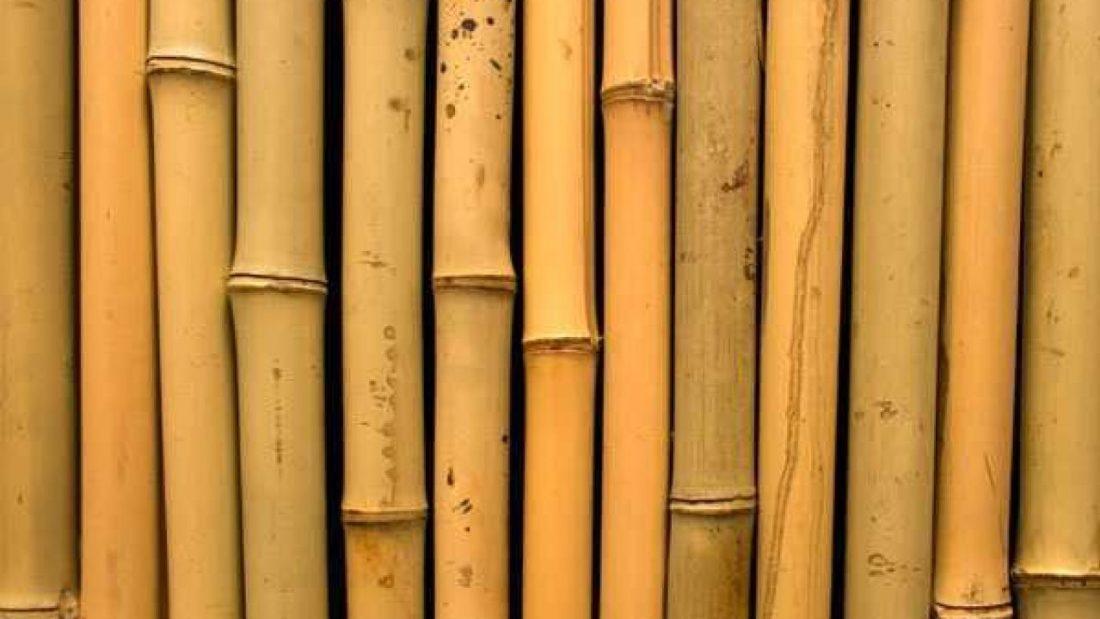 Kelebihan dan Kekurangan Bambu