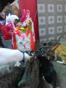 sumbangan makanan kucing dari mbak meilani