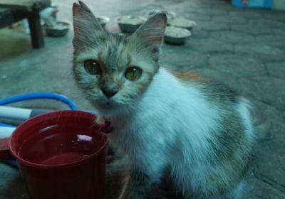 adopsi kucing