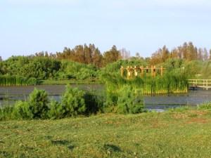 Azjraq wetlands 2013 Jordan 222