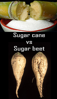 sugarcane-vs-sugarbeet2