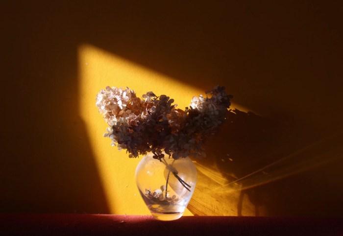 Foto still life menggunakan cahaya alami, credit : Maria Ionova @marusyaionova