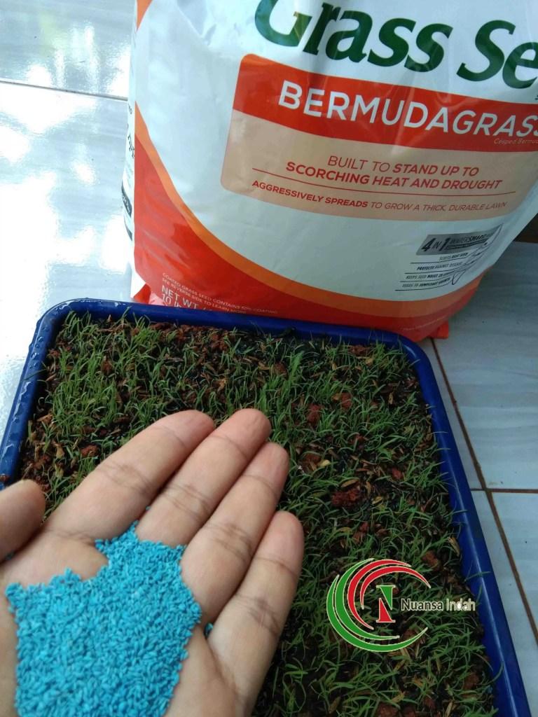 Jual Bibit Rumput Di Medan