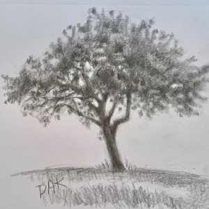 Drawing a Tree Project by Deborah Ann Kirkeeide