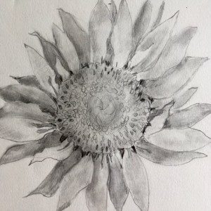 Sunflower Drawing Project