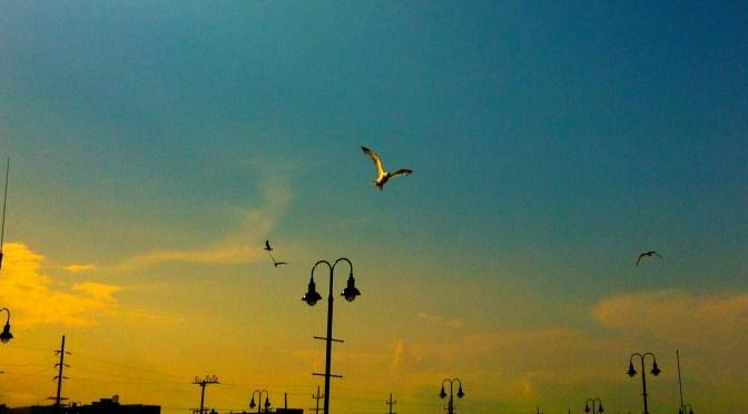 A Sea Bright Sky for the Birds