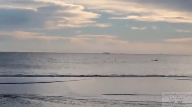 Dolphin Sighting in Sea Bright