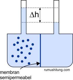 membran semipermeabel