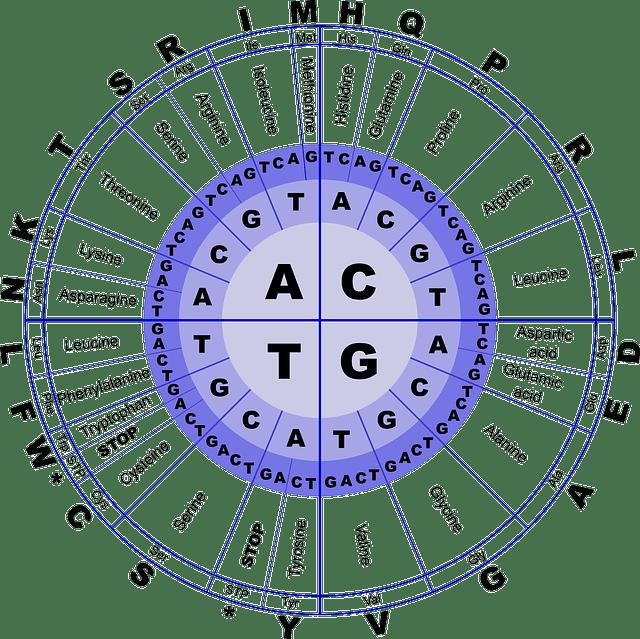 Makromolekul : Amina, Asam Amino, dan Protein