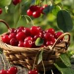13 super potravin proti bolesti azánětům