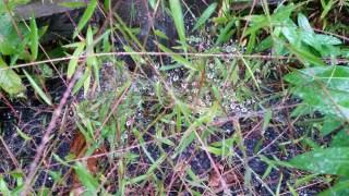 spider webs in the rain look like diamonds