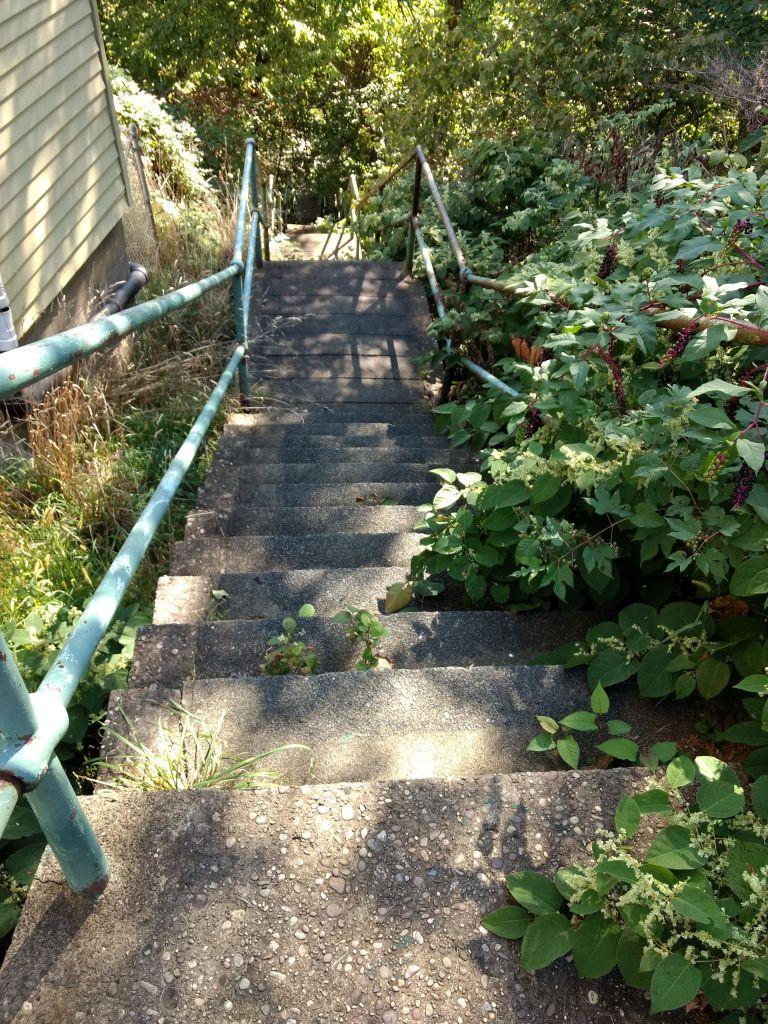 Bower Street Steps
