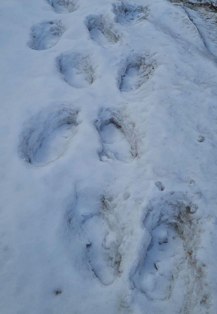 Footsteps in Deep Snow