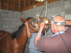 horse dental work
