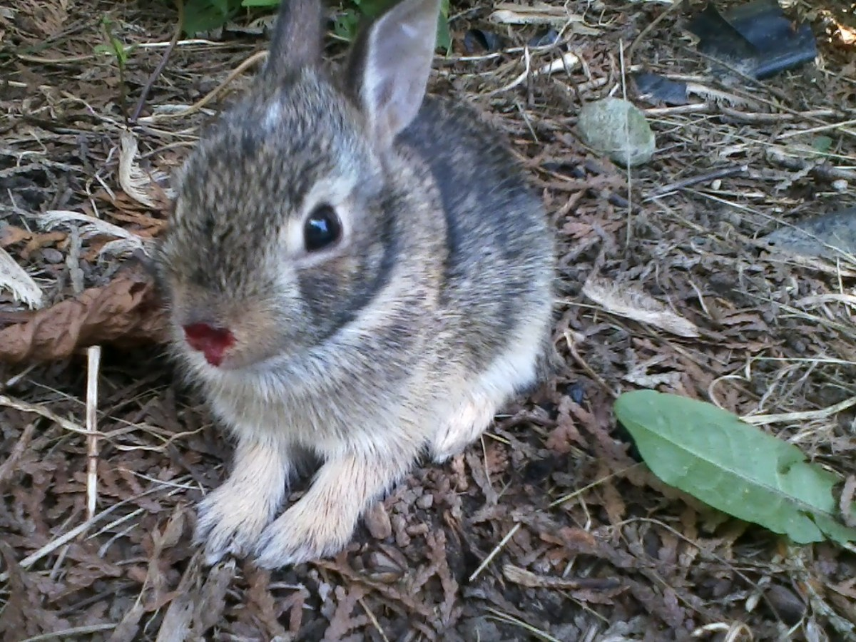 Baby bunny that I think I bumped in the nose