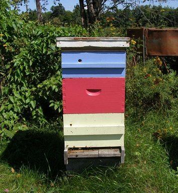 beehive in summer