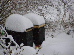 wintering bees