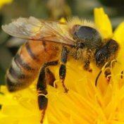 somerset beekeepers
