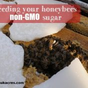 feeding your bees non-gmo sugar