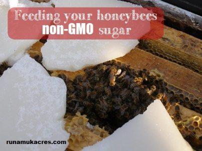 feeding your bees non-gmo sugar