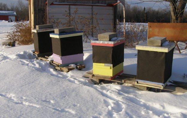 winter apiary