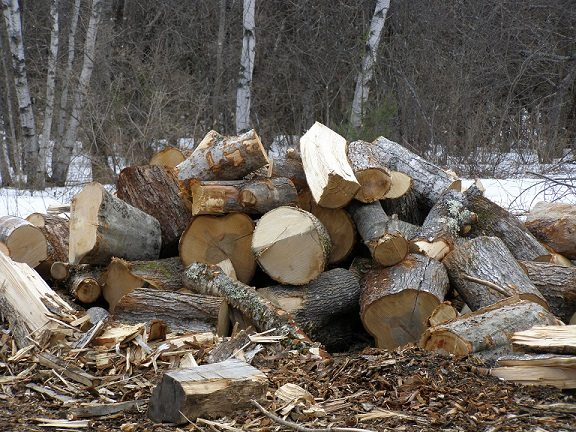 even more firewood